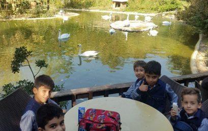 اردو باغ پرندگان
