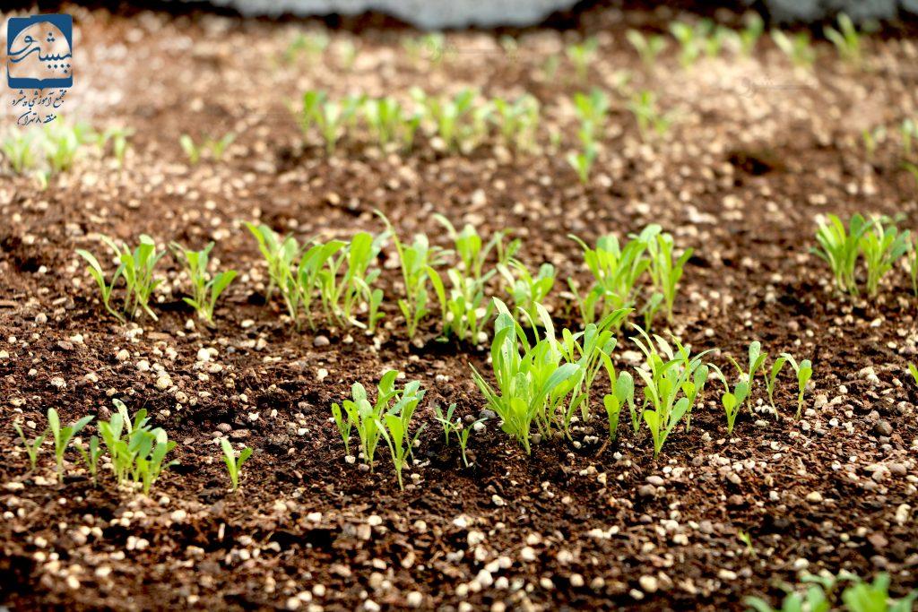 باغبانی در دبستان پیشرو